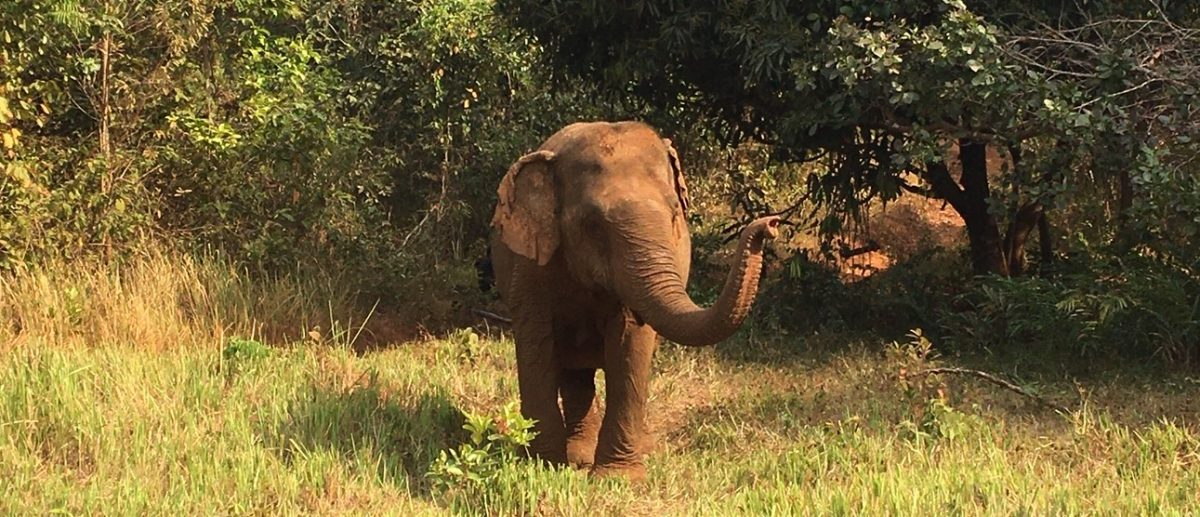 No rides, no tricks, just elephants. Eine Woche Volunteering beim Elephant Valley Project
